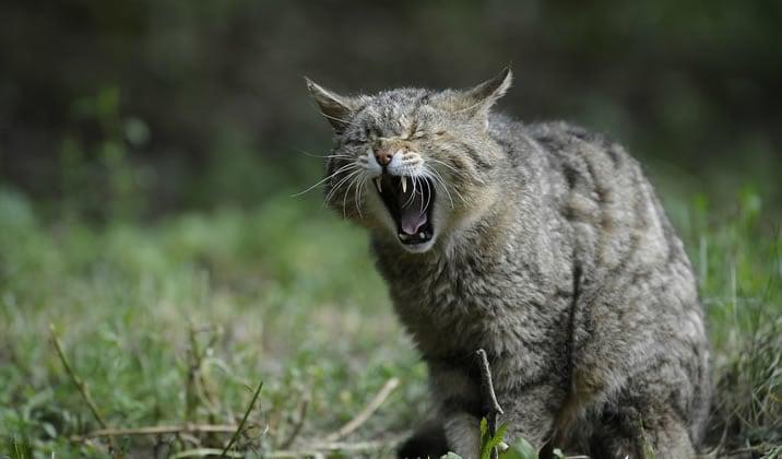 猫の威嚇悪手なのか?イメージ