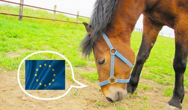 EUの状況草生える