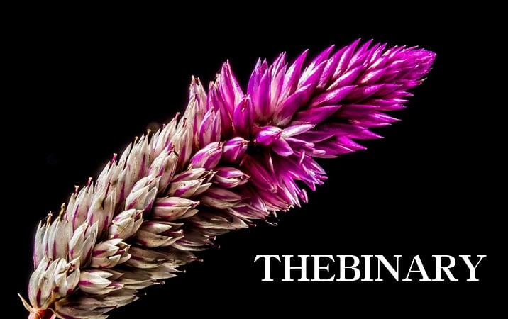 THEBINARYのイメージ