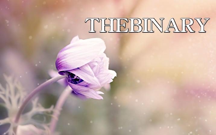 THEBINARYXCOINのイメージ